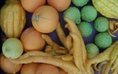 Récolte des agrumes